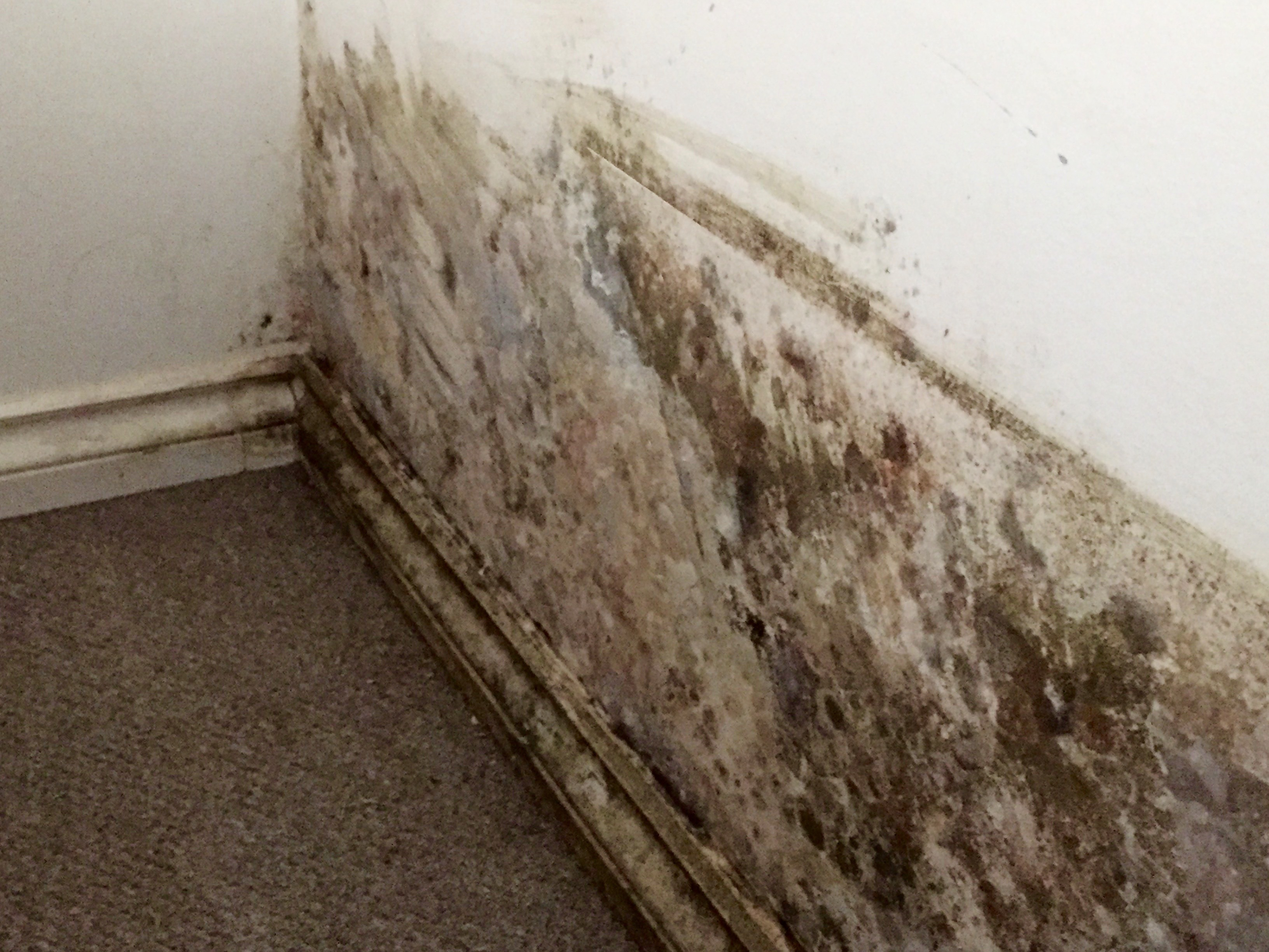 Mold On bedroom wall