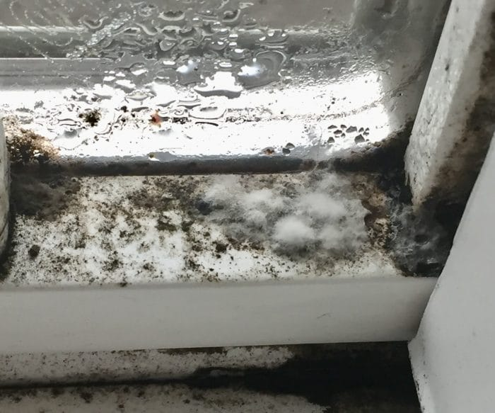 growing mold on window