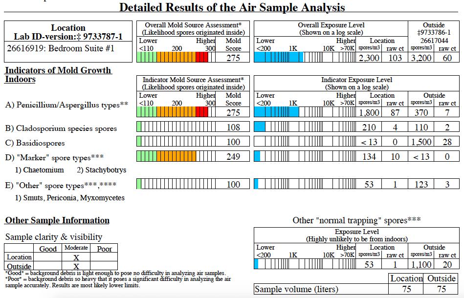 sample mold lab report
