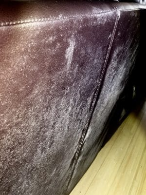 mold growth leather sofa